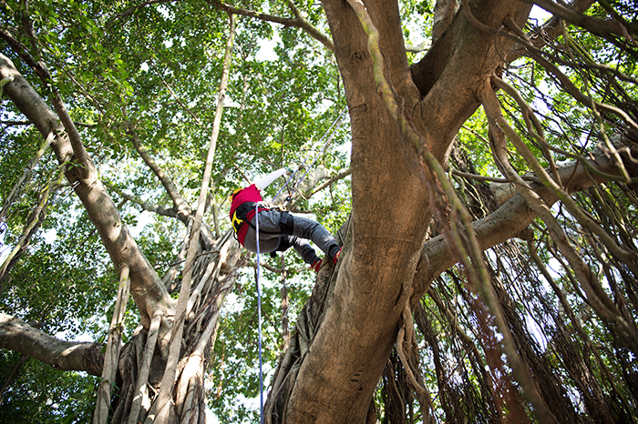 asweatlife_Tree-Climbing-With-EarthJOY