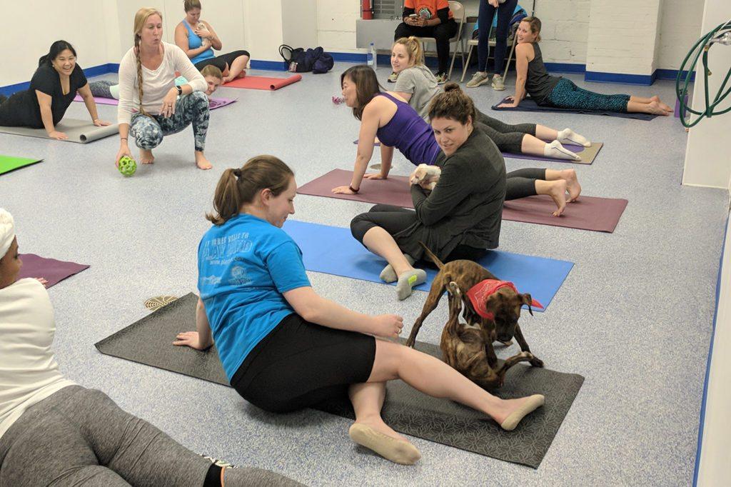 yoga with animals