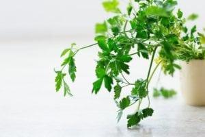 herb chimichurri
