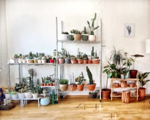 how to develop a green thumb in a tiny apartment