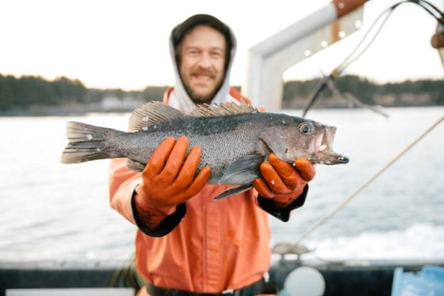 ryan horwath sitka salmon shares