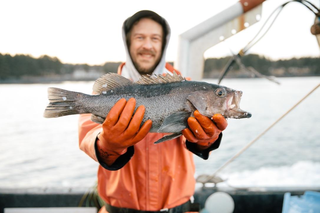 ryan horwath sitka salmon shares