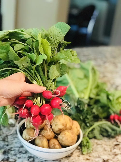 radishes from a CSA