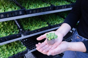 gotham greens basil plant