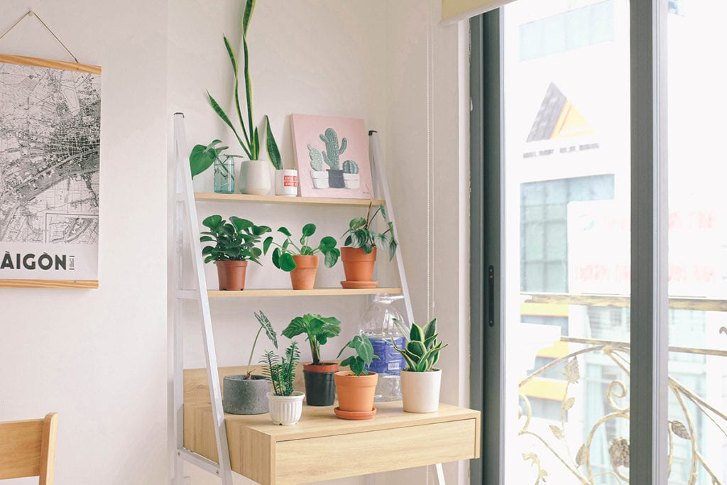 how to grow indoor plants