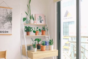how to grow indoor house plants