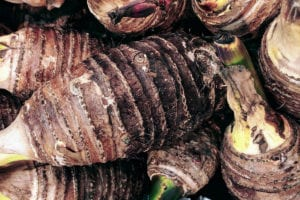 what is taro root