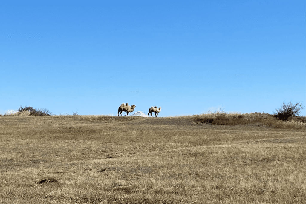 jamie inner mongolia