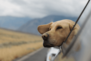 how to road trip with a dog