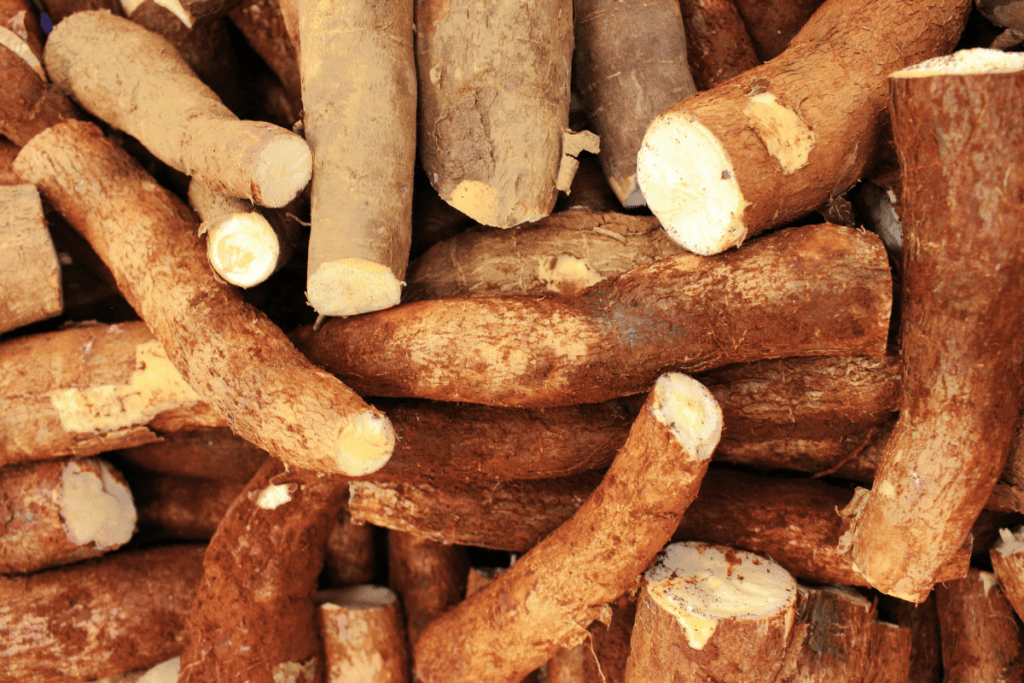 what is cassava