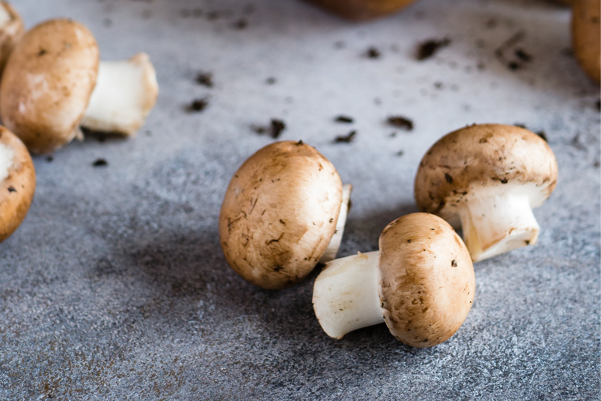 how to forage for mushrooms